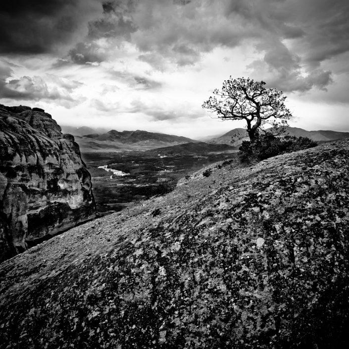 Meteora Tree