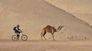 Race in the Desert