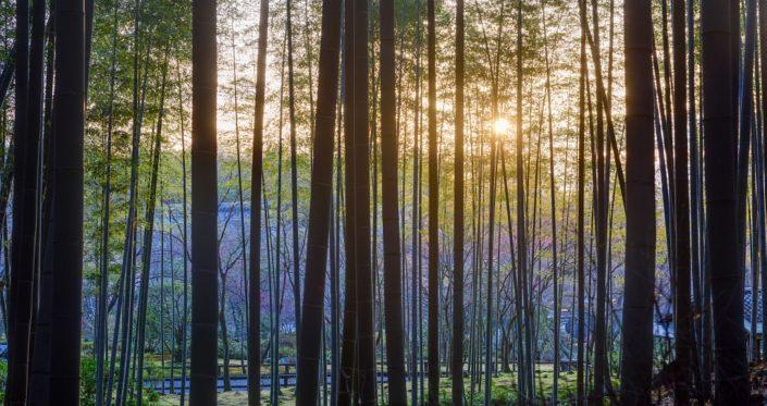 Sunrise Bamboo Veil