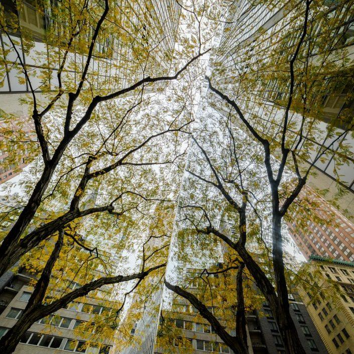 NYC Autumn