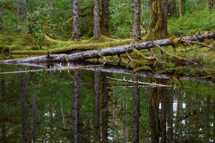 Blackwater Pond Reflections