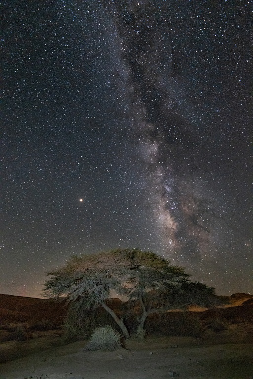 Milky way Acacia