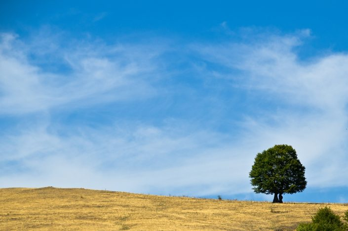 Lone tree, blue sky and gentle clouds