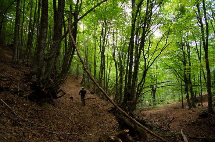 Biking Through the Enchanted Forest