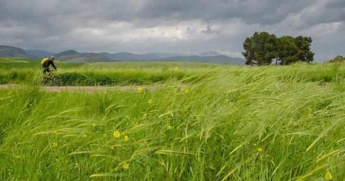 Galilee Green