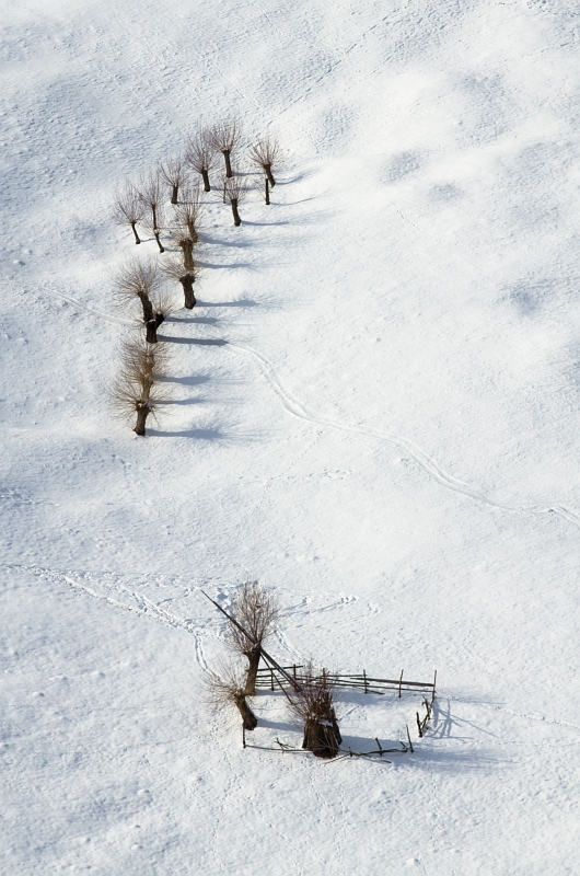 Magura Bare Trees