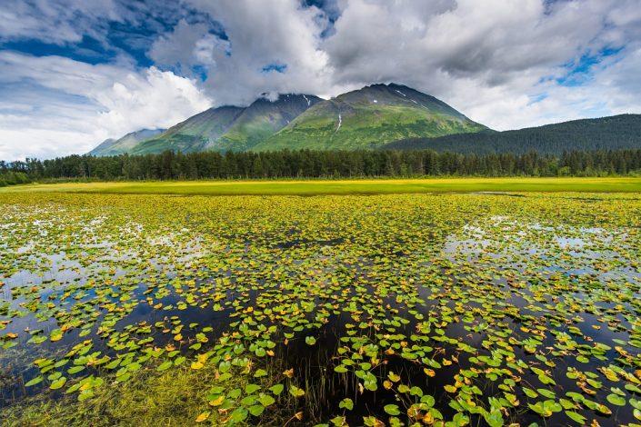 Seward Water Lily Pond