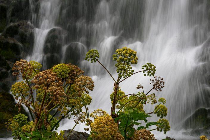 Flowery Falls