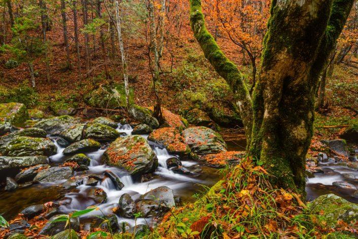 Japanese Autumn Paradise