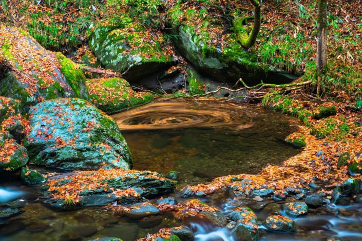 Japanese Autumn Paradise with Swirl
