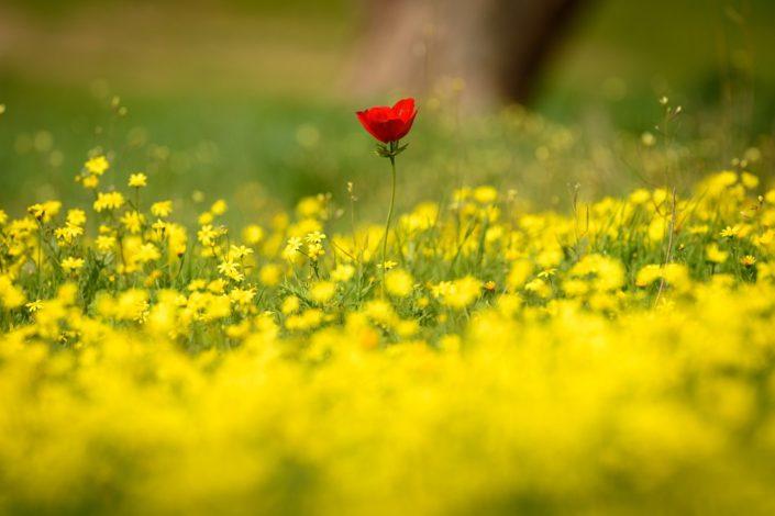 Lonely Anemone, Ruhama